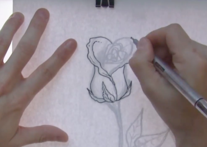 tracing a rose