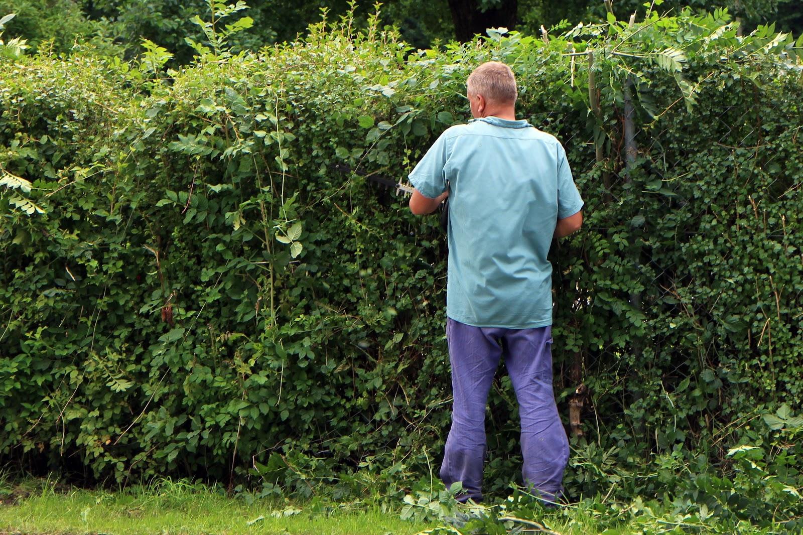 man-tree-grass-person-plant-lawn-meadow-flower-green-agriculture-garden-cut-gardening-shrub-plantation-woodland-workers-hedge-gardener-pruning-individually-landscape-gardener-woody-plant-948633.jpg
