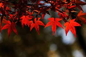 Image result for gardens in autumn film