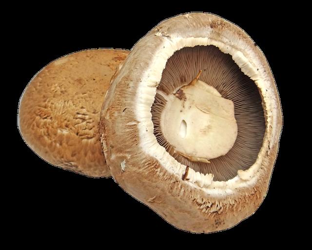 Jamur Portabello yang memiliki cita rasa khas