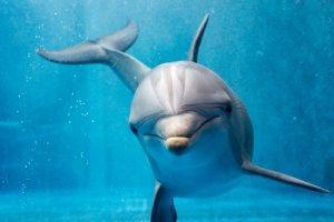 Comportamiento de los delfines, ¿casi humano? - Mis Animales
