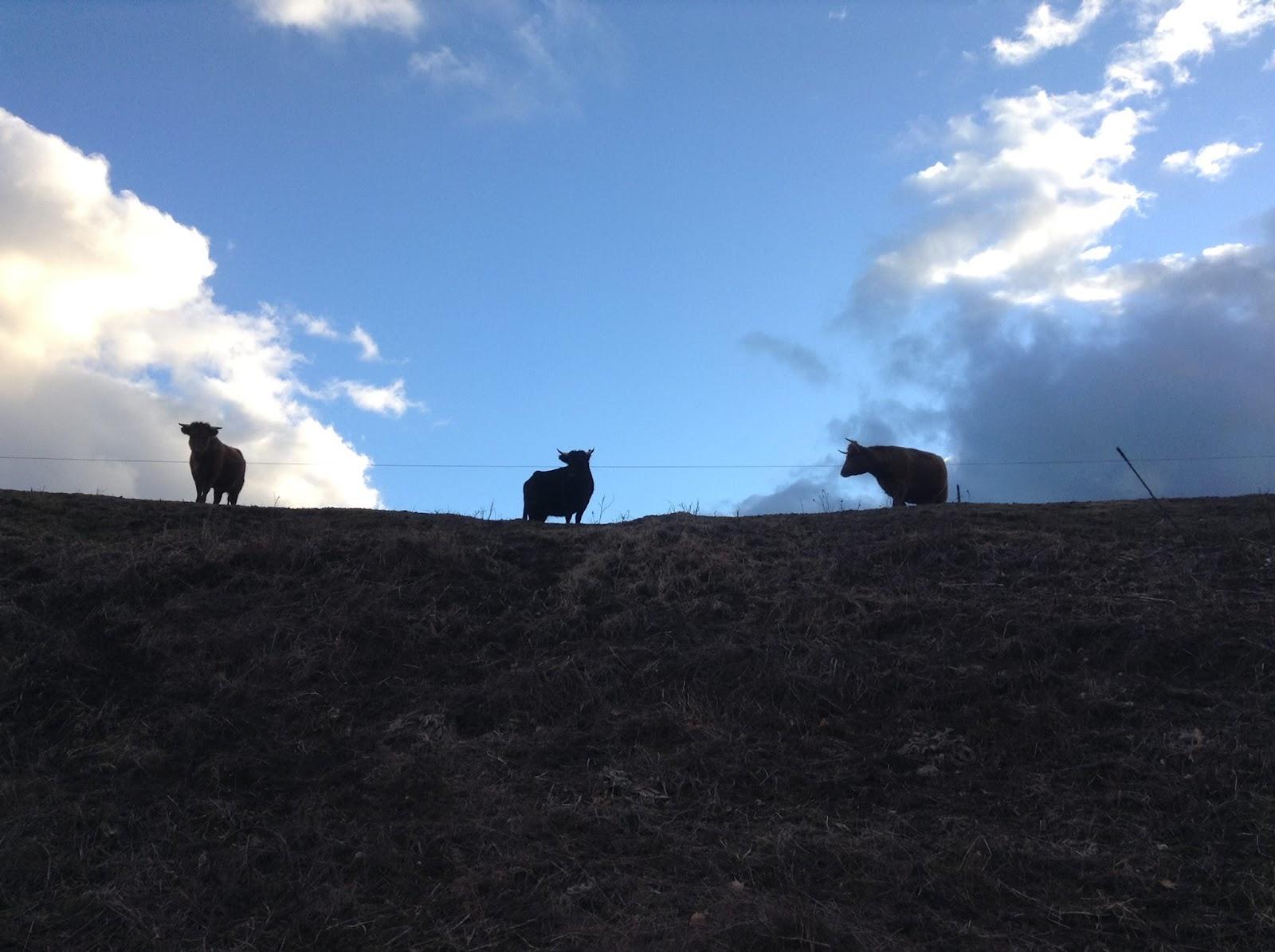 Farm Image 2