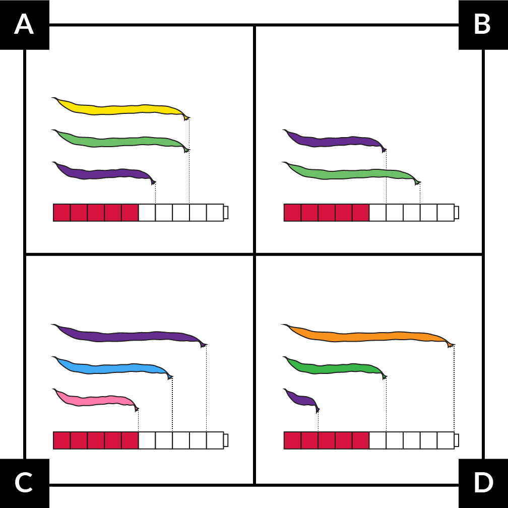 A. shows a yellow bean, 8 cubes long. A green bean, 8 cubes long. And a purple bean, 6 cubes long. B. shows a purple bean, 6 cubes long. And green bean, 8 cubes long. C. shows a  purple bean, 9 cubes long. A blue bean,  7cubes long. And a pink bean, 5 cubes long. D. shows an orange bean, 10 cubes long. A green bean, 6 cubes long. And purple bean, 2 cubes long.