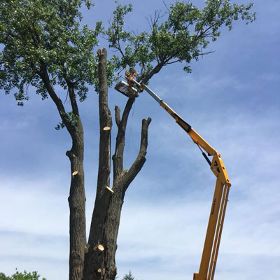 wildcat creek tree services provides tree maintenance care in lafayette indiana