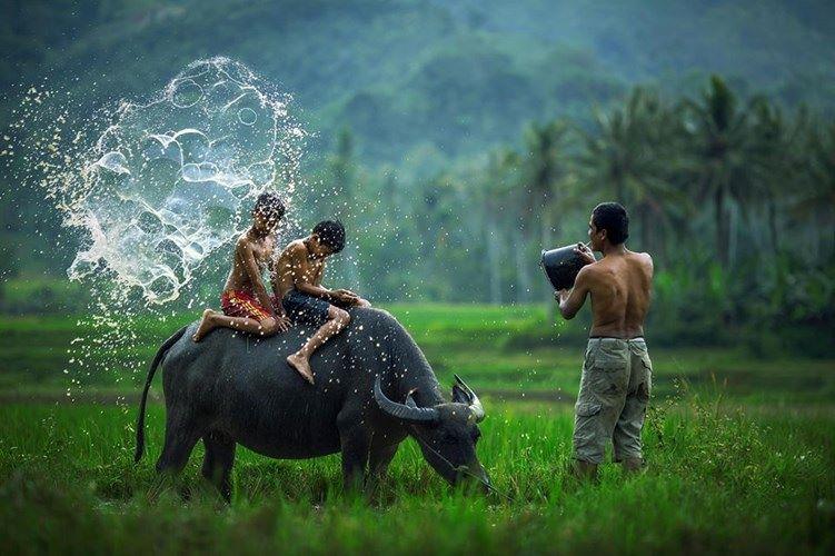 Series tìm hiểu về linh thú của các nước trên thế giới (Châu Á)