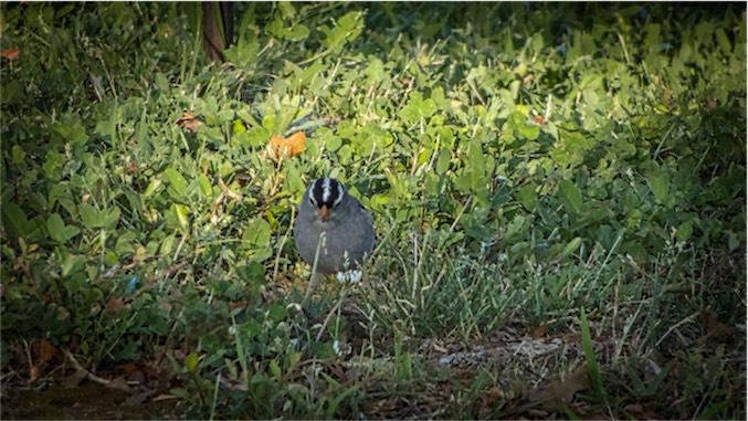 Tiny Bird 2.jpg