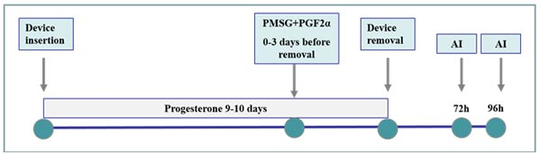 Esquema de sincronización del estro con base en la estimulación de la función del CL: dispositivos intravaginales de progesterona. Se requieren dos IA a tiempo fijo por la variabilidad en el tiempo de ovulación.