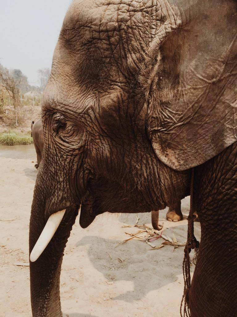 Elephant Retirement Park