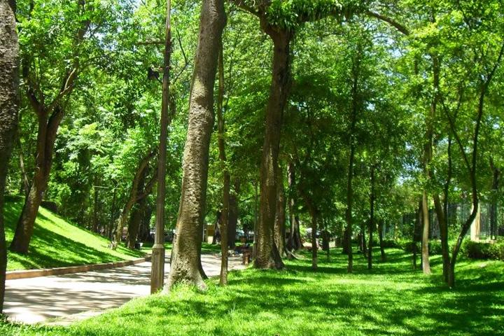 Cây che bóng thường sử dụng tại các công trình công viên