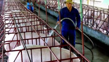 Mối tương hỗ giữa máy bơm nước và ngành nông nghiệp