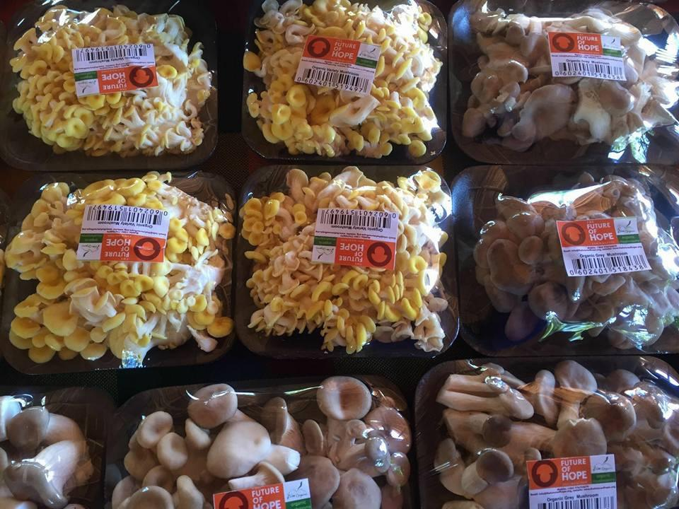 Yellow and Grey Oyster mushrooms from The Future of Hope Foundation ready for the market. Credit: The Future of Hope Foundation.