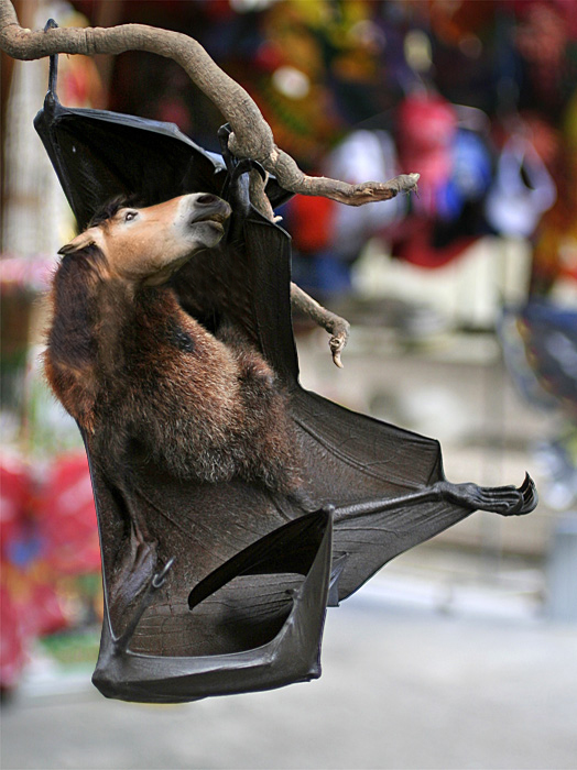 http://fc04.deviantart.net/fs24/f/2008/003/3/6/Bat_Horse_by_Castlegard.jpg