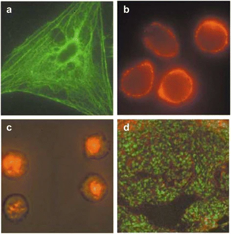 Applications of bioconjugation to surfaces include medical imaging.