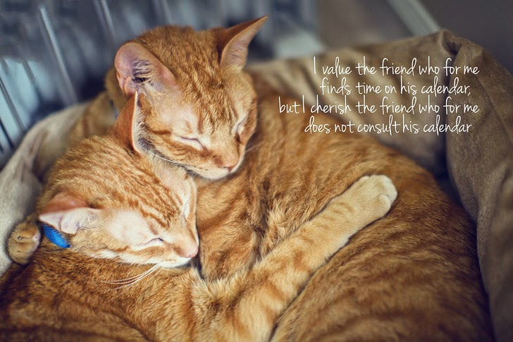 Our Orange Tabby Cats from Furkids.