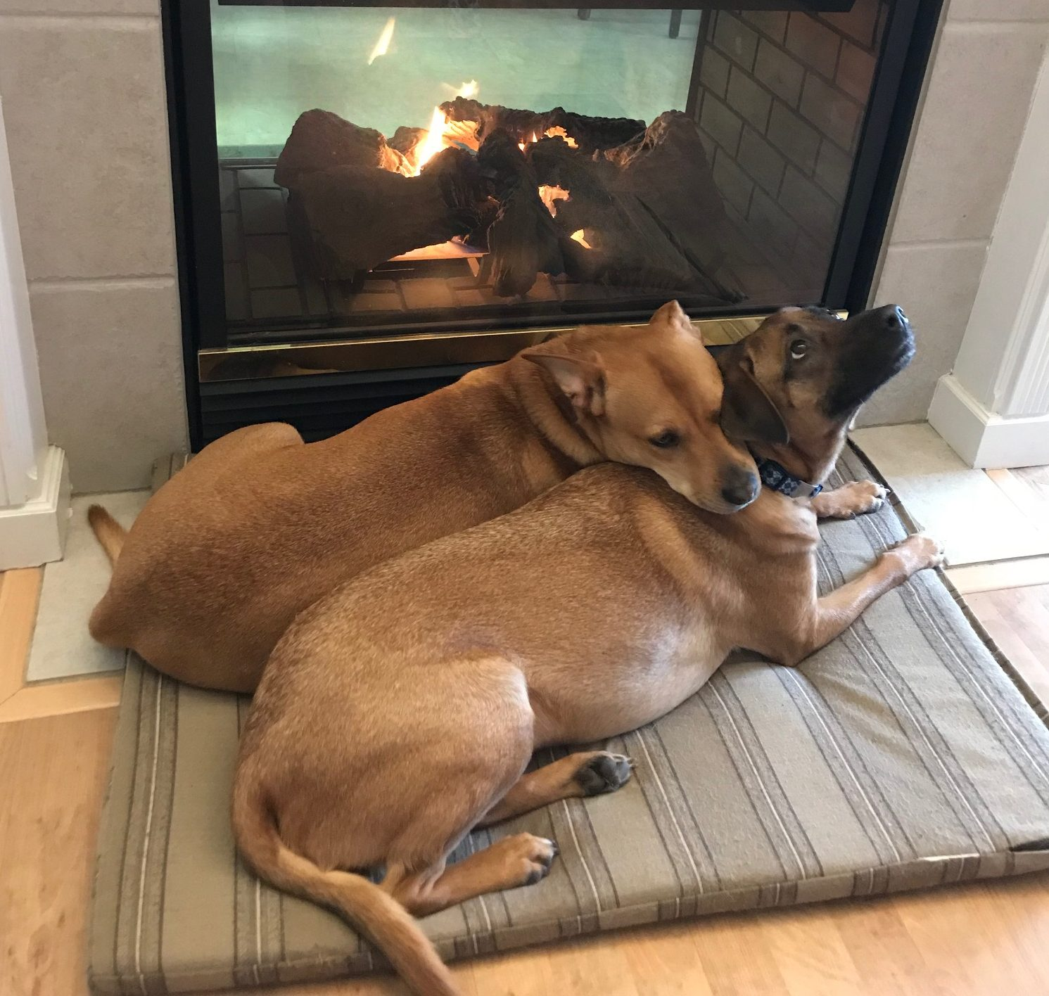 Roxy and Rico by fireplace- How To Spoil Your New Puppy With The Best Accessories