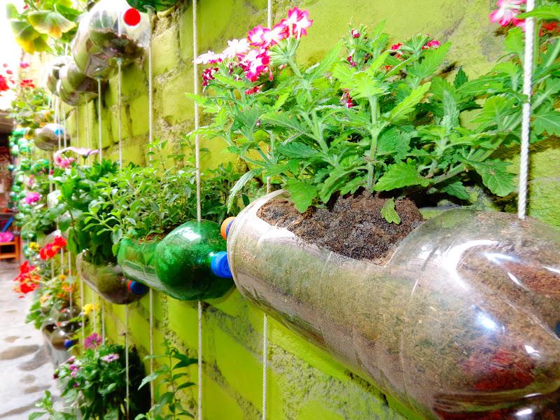 Tecnología 6to A: plantas colgantes en botellas