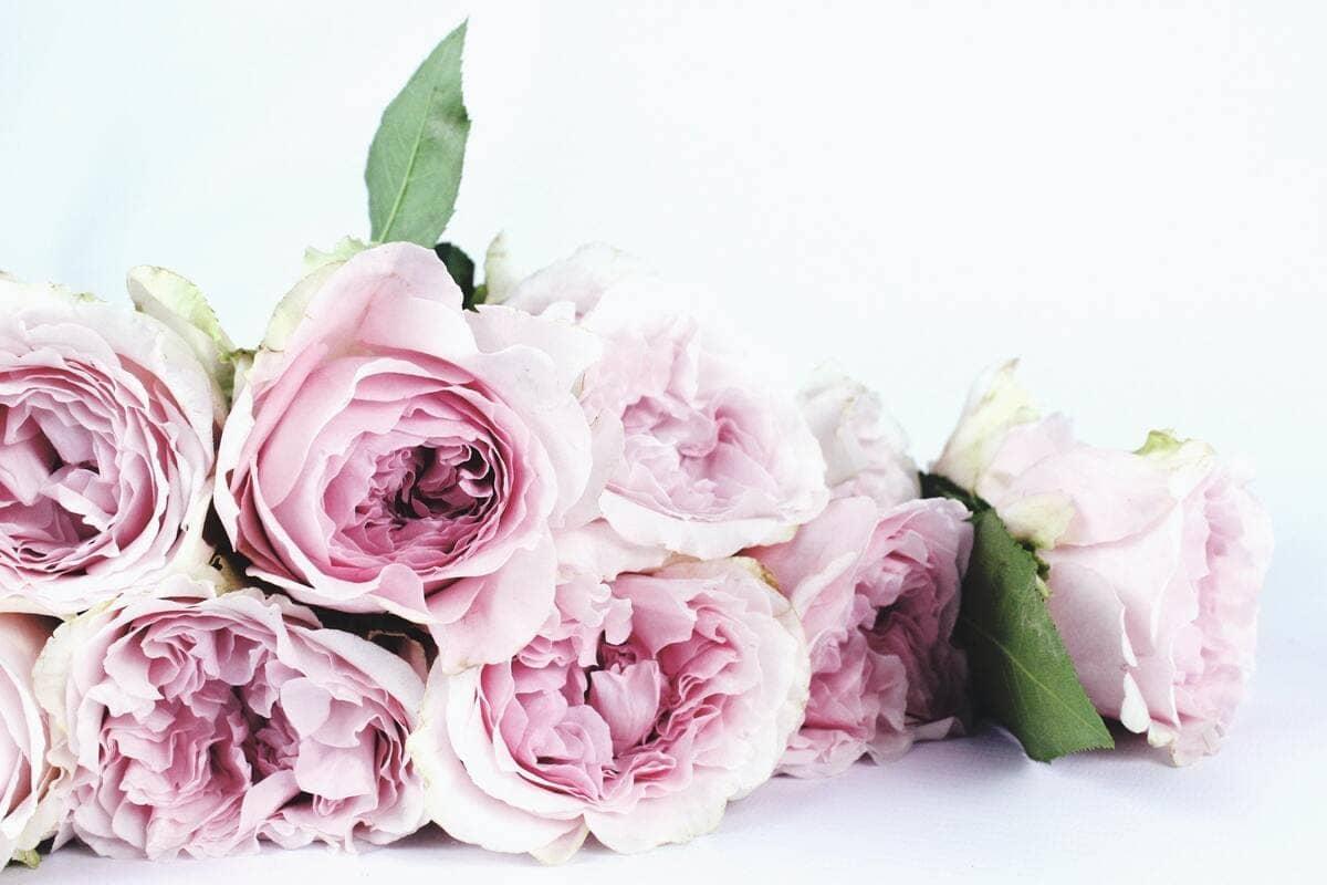 Un mazzo di rose di colore bianco e rosa