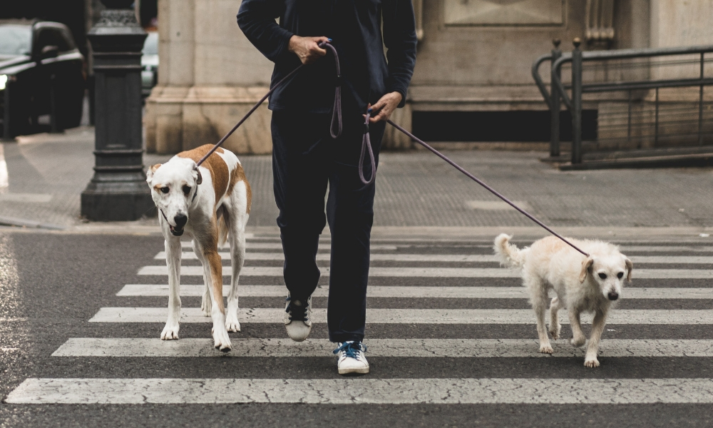 man walking dogs in the city