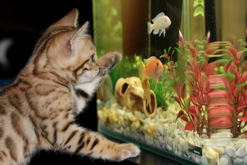 How to Set Up Aquariums to Be a Vital Part of the Interior Design