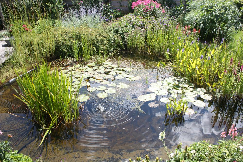 Lake Maintenance Advice - Preventing The Buildup of Algae 2