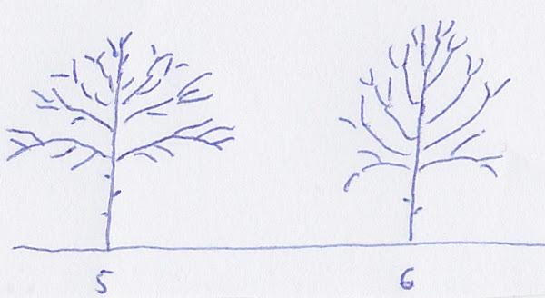 5,6.jpg