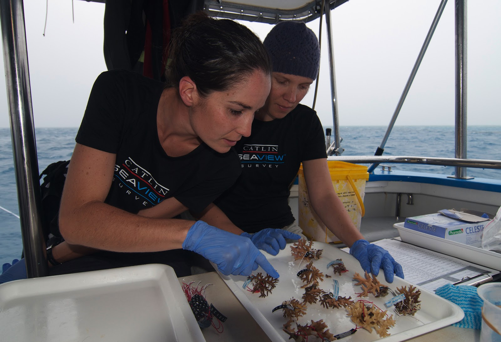 Catlin Seaview Survey. Deep Reef - Sorting Coral Samples.jpg