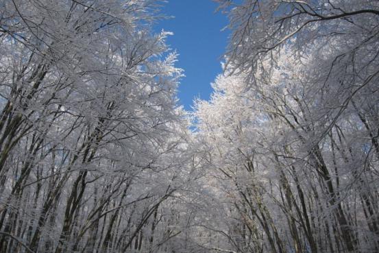 冬天美人林
