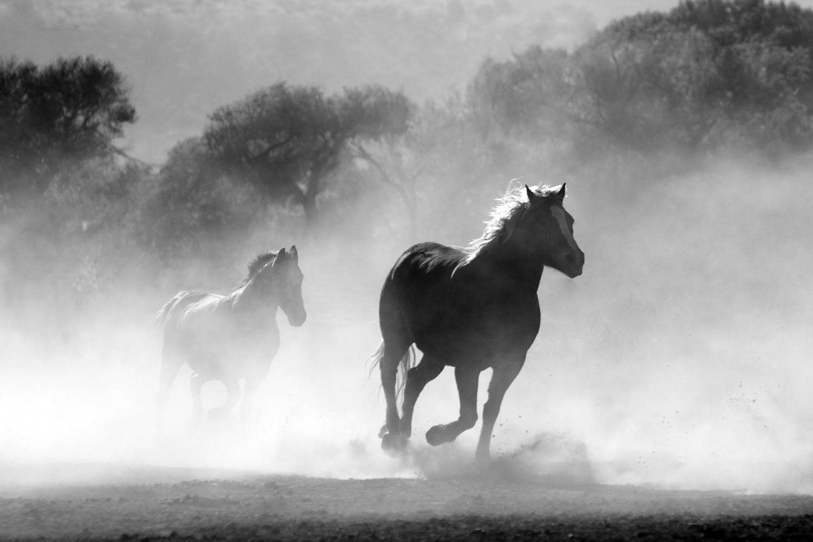 Cavalhos correndo - autofoco no movimento