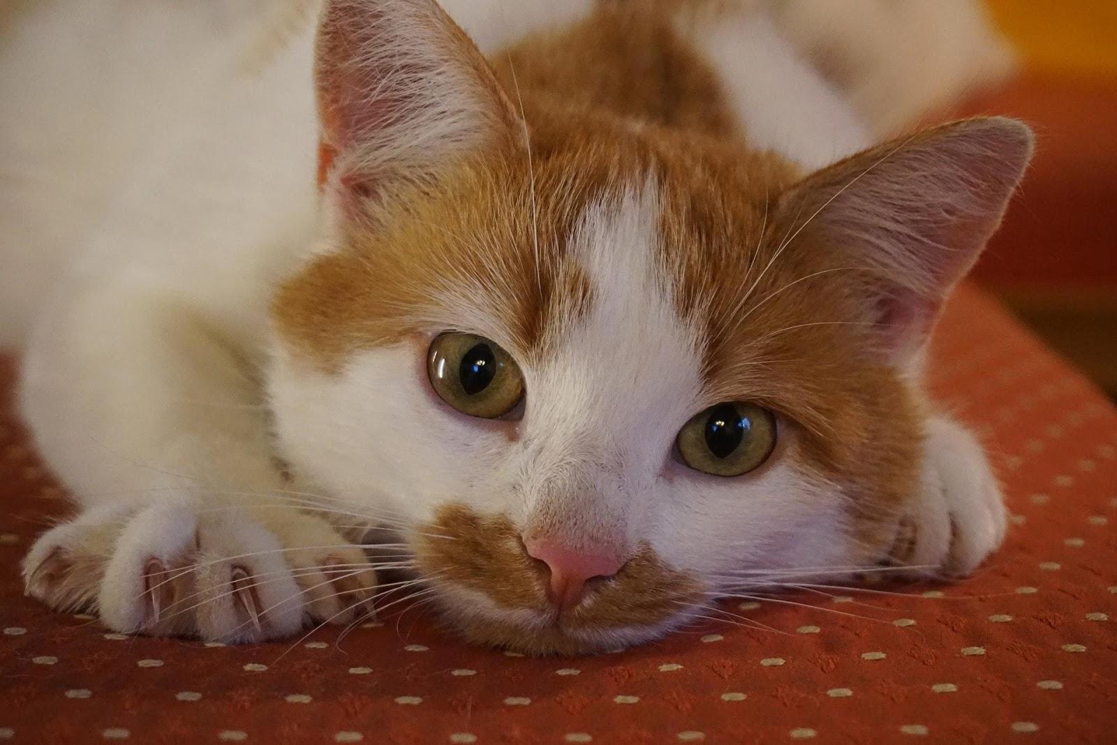 cat-2830802_1920-min.jpg