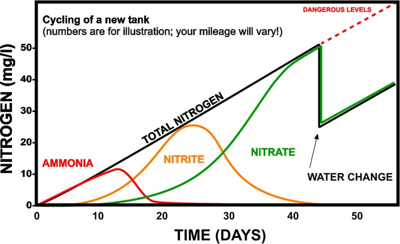 nitrogen-cycle-graphic.jpg