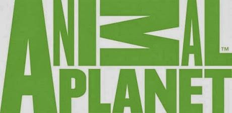 Kênh Animal Plannet Trực Tuyến
