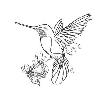 Colibri #23 (Animaux) – Coloriages à imprimer