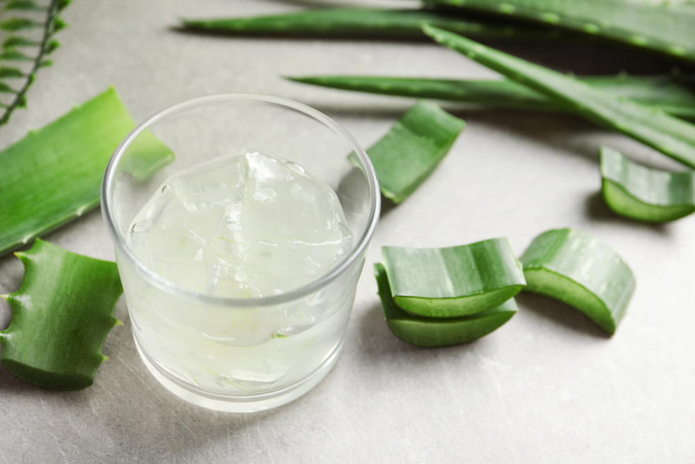 Aloe Vera is known as the medicinal plant that's been used to cure various skin problems and also hair problems. It's usually better if you can use Aloe Vera directly from the plant. You can also grow Aloe Vera plant at your home itself.