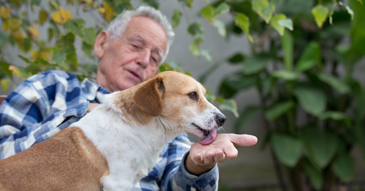 Il arrive que les chiens lèchent quand ils ne sont pas à l'aise