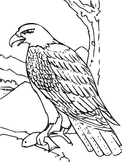 eagle-33121_640.png