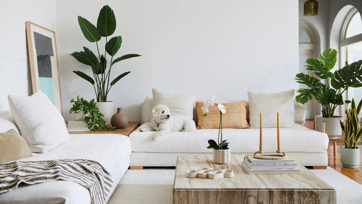 Plant style ideas in room