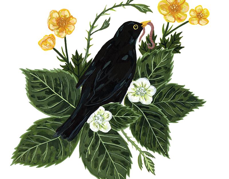 Image result for black bird illustration