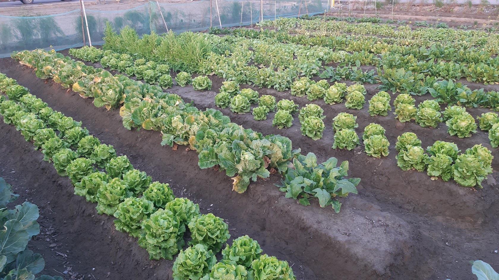 因應極端氣候,農業保險有用嗎?
