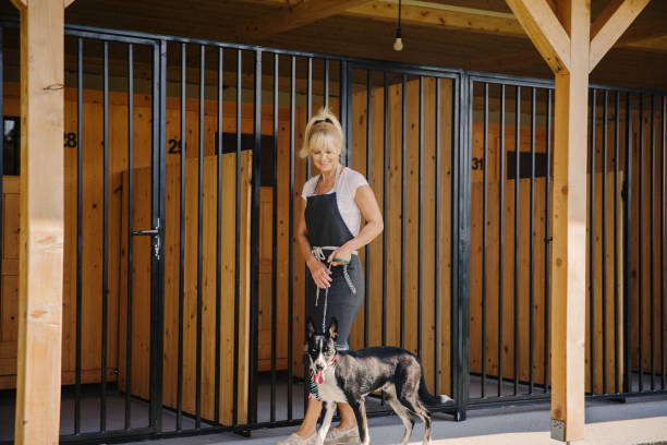 time for walking at doggie daycare - dog breeder kennel stock pictures, royalty-free photos & images