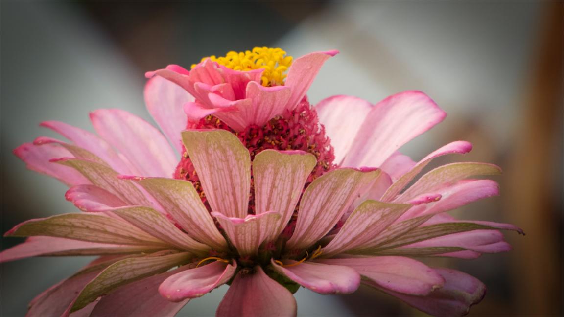 Pink Zin.jpg