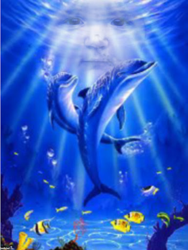 Delfíny.jpg