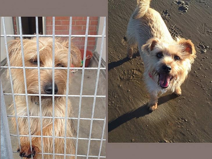 Perro dentro de una jaula y paseando en la playa
