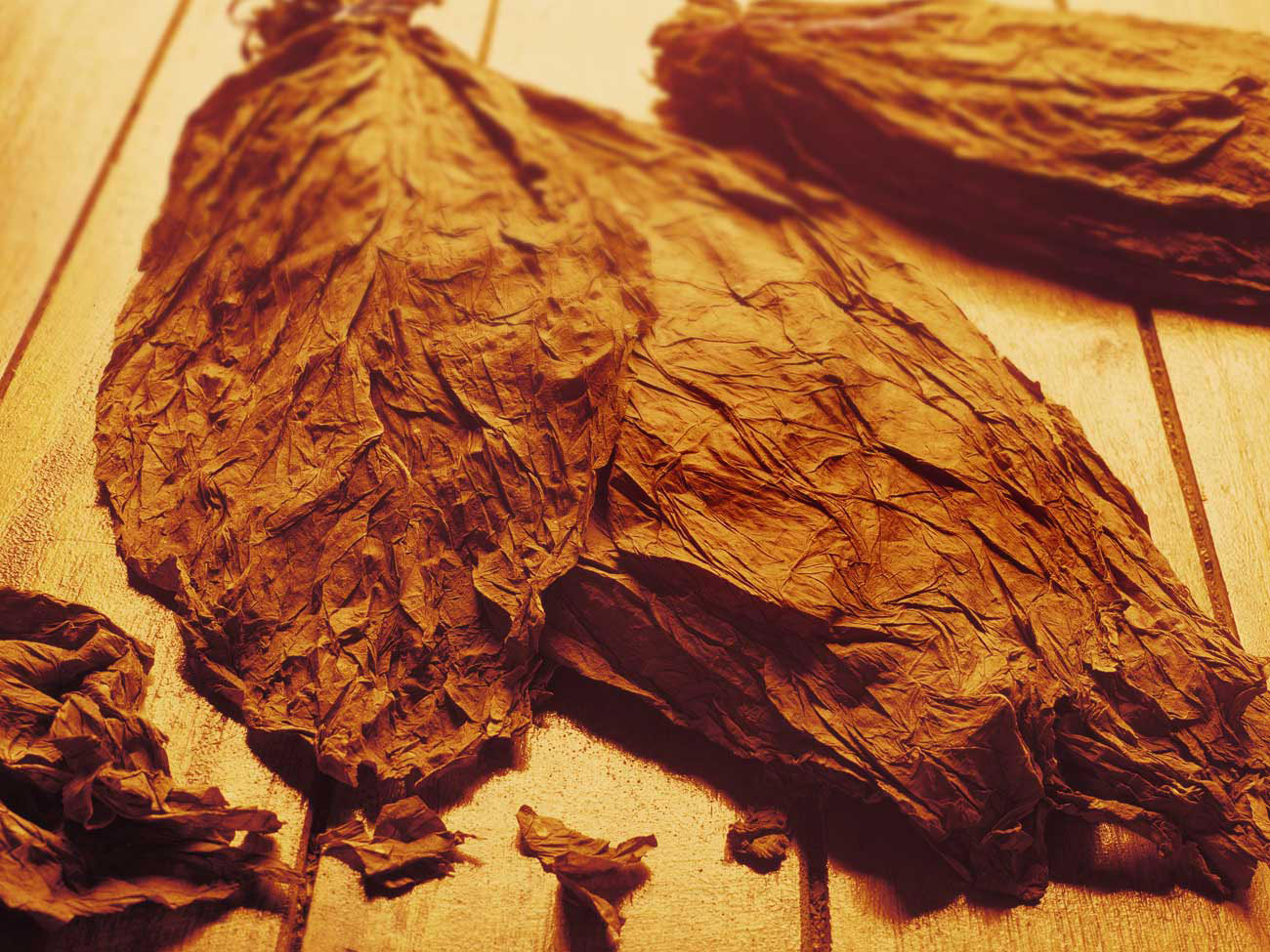 dry-tobacco-leaves.jpg