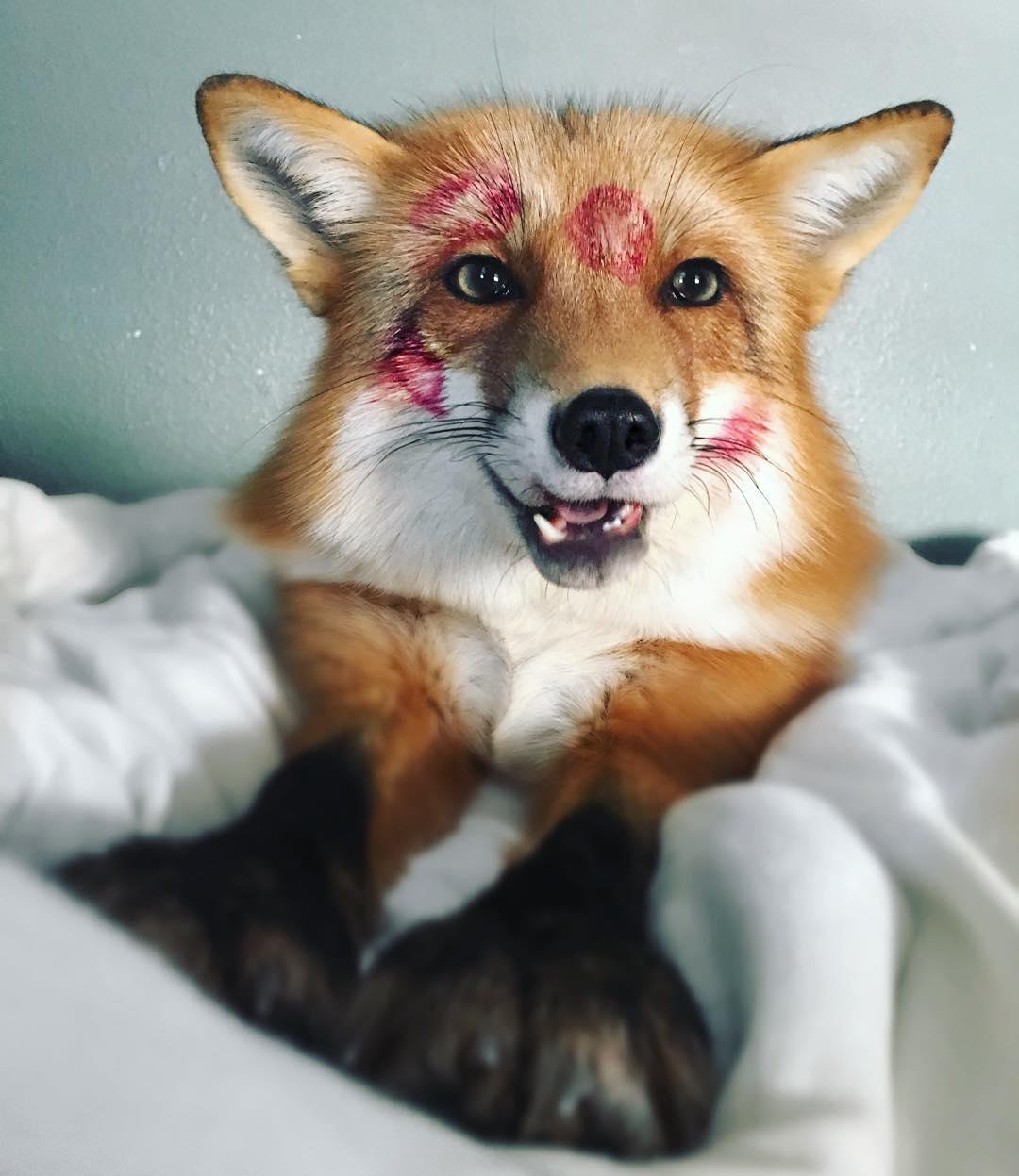 ¿Un perro de color naranja?