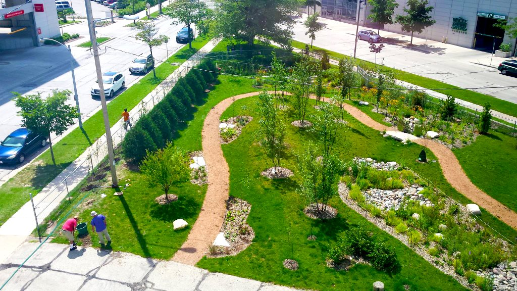 rain garden, Milwaukee.jpg
