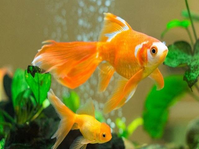 Hình ảnh con cá có thể xuất hiện bất cứ lúc nào trong giấc mơ của bạn