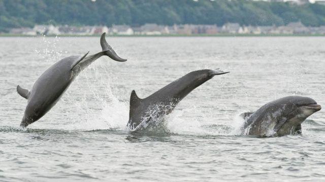 Деякі дельфіни вбивають своїх суперників
