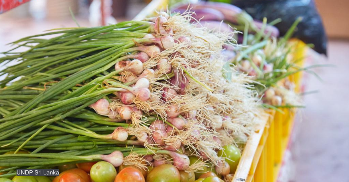 Civil society rejects UN committee's food systems reform guidelines