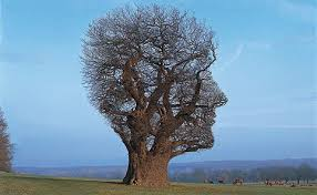 Image result for pink floyd tree of half life