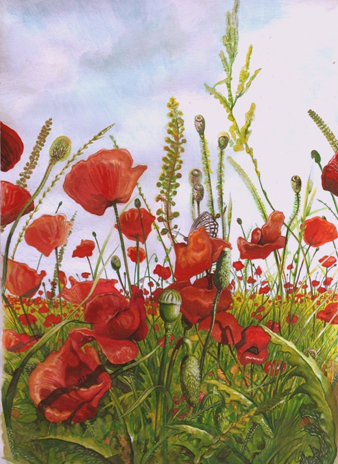 POPPIES IN THE LOWLANDS - Illustration (landscape), MMXI - Gouache on carton - 13,78 X 9,84 in.jpg